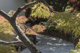 Light in the Japanese garden