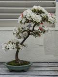 One more azalea