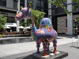 'Dromedary Camel'