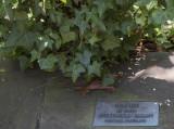 Buckingham Palace ivy