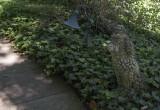 Pet cemetery guardian