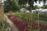 Greenhouse through the cutting garden