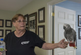 Smoky, an African grey parrot and AEF staff member