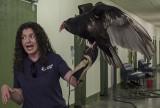 George, the turkey vulture