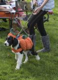 The pumpkin dog