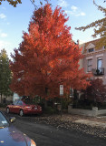 At last some fall color