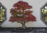 Thanksgiving bonsai