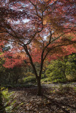 Japanese Woodland
