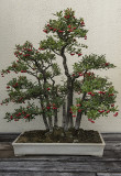 Festive bonsai