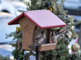 Fight at the birdhouse (2)