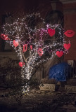 The nighttime tree for lovers