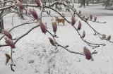 Sahraa through the magnolias
