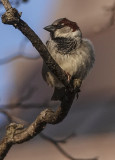 Even sparrows like to pose