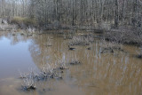 Wetland and woodland