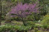 Purple, too