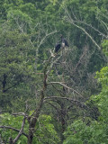A peek into the life of Mr. & Mrs. Vulture (2)