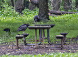 Vulture talk