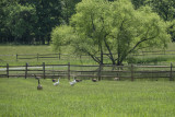 A haven for birds as well as rescued farm animals