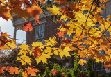 Fall Color and Old Houses on Capitol Hill
