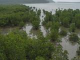 Mangrove swamp, Iriomote Island