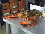 Lobsterzilla - 8.5 lbs.