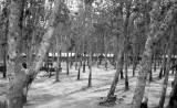 2/2nd Infantry (Mechanized) area - Lai Khe basecamp