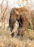 Madolo - Big tusker