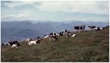 Lago di Garda 1972