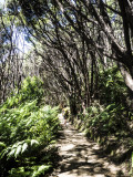 Manuka bush light