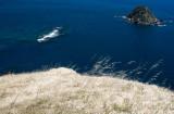golden grass and ocean