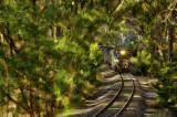 woodland railroad 2