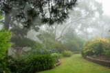 garden mist 1