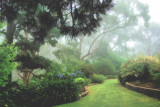 garden mist 2