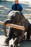 Elephant Conservation Centre at Lampang, outside Chiang Mai