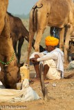 Pushkar camel fair, Rajasthan, India