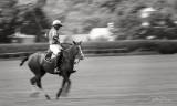 Gatsby Gallop Polo Match