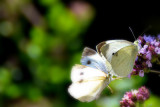 butterflies_moths