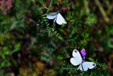 butterflies_moths