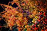trees__shrubbery