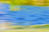 Freshwater Marsh Abstract in Early Spring