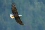 Alaska: Eagles & Grizzly Bears