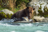 Alaska: Eagles & Grizzly Bears