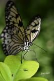Les insectes, papillons, chenilles etc.