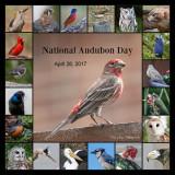 Let's Celebrate Birds!