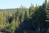 Alaska Land Tour and Cruise August 2018