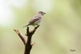A reunion with some mountain birds