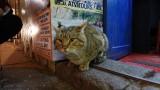 Cusco Tours Kitty