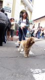 Dog and Owner enjoy Quito Historic center on a Sunday