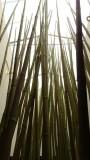 San Diego Zoo Gift Shop Bamboo