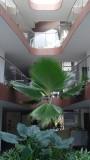 Azul Fives Villa 16 Lobby